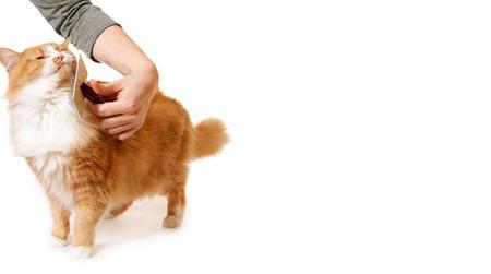 Brosser votre chat: Source: Petfinder.com