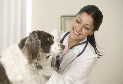Visite vétérinaire: Source: Petfurniture.blogspot.com