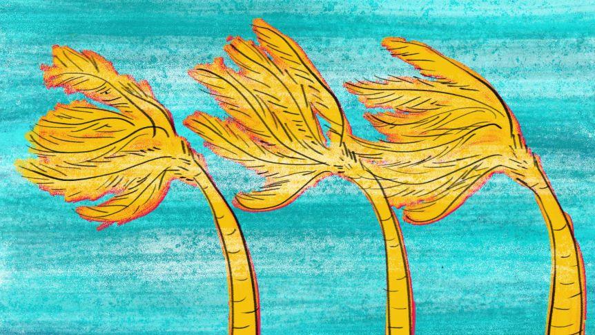 Dessin de palmiers dans le vent pour décrire ce que c'est que de survivre aux cyclones australiens Debbie, George et Tracy.