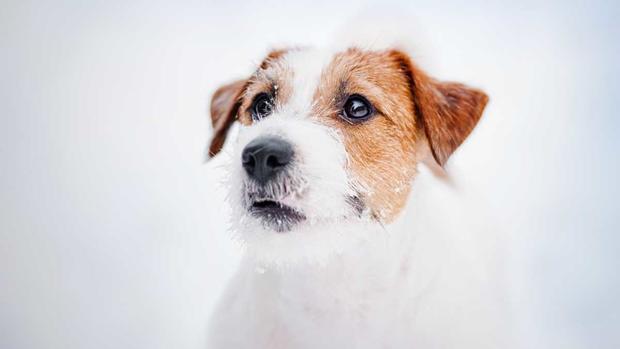 Comment protéger les animaux domestiques par temps froid