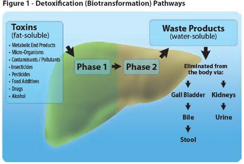 detox-pathways51