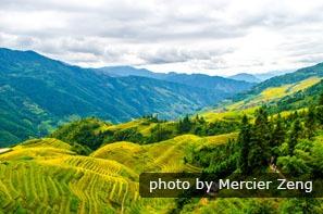 Les rizières en terrasses de Longji en automne