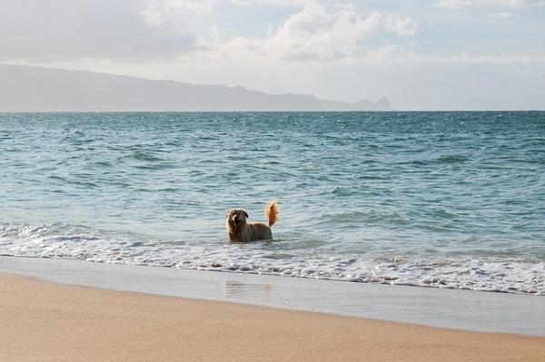 Chien s'amuser dans la mer