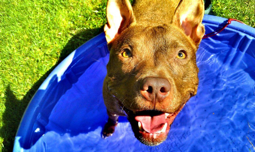 Consultez nos dix meilleurs conseils de sécurité par temps chaud pour les animaux domestiques pour une protection ultime.