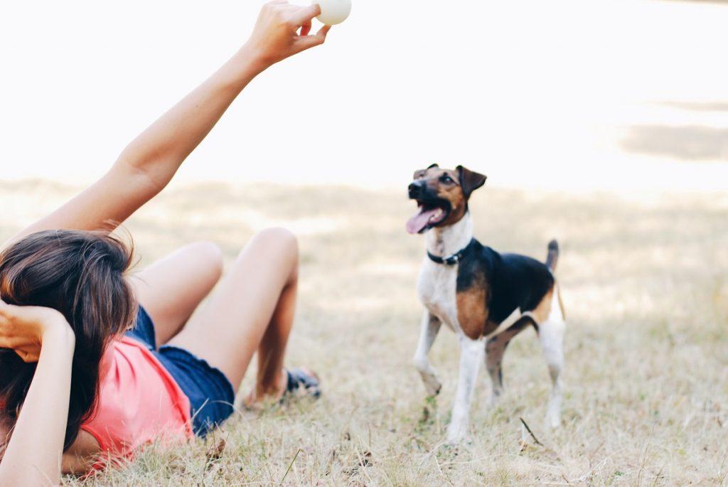 Les conseils de sécurité pour les animaux domestiques sont essentiels pour le bien-être de nos amis à fourrure.
