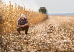 Jeune paysan dans les champs de maïs