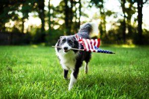 Photo d'un chien qui court avec un drapeau américain