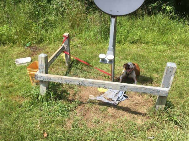 """un """"chien de basse-cour"""" est emmêlé au bout d'une attache, laissé dehors dans une chaleur extrême. les chiens meurent de coup de chaleur tout l'été, découvrez comment vous pouvez aider. """"width ="""" 602 """"height ="""" 452 """"srcset ="""" https://www.peta.org/wp-content/uploads/2019/08/348 -E-Jackson-St-Rich-Square-NC_BYD_7.12.18_Angel-2-602x452.jpg 602w, https://www.peta.org/wp-content/uploads/2019/08/348-E.- Jackson -St-Rich-Square-NC_BYD_7.12.18_Angel-2-300x225.jpg 300w, https://www.peta.org/wp-content/uploads/2019/08/348-E.-Jackson-St-Rich- Square-NC_BYD_7.12.18_Angel-2-768x576.jpg 768w """"tailles ="""" (largeur maximale: 602px) 100vw, 602px """"/></p> <p><noscript><img class="""