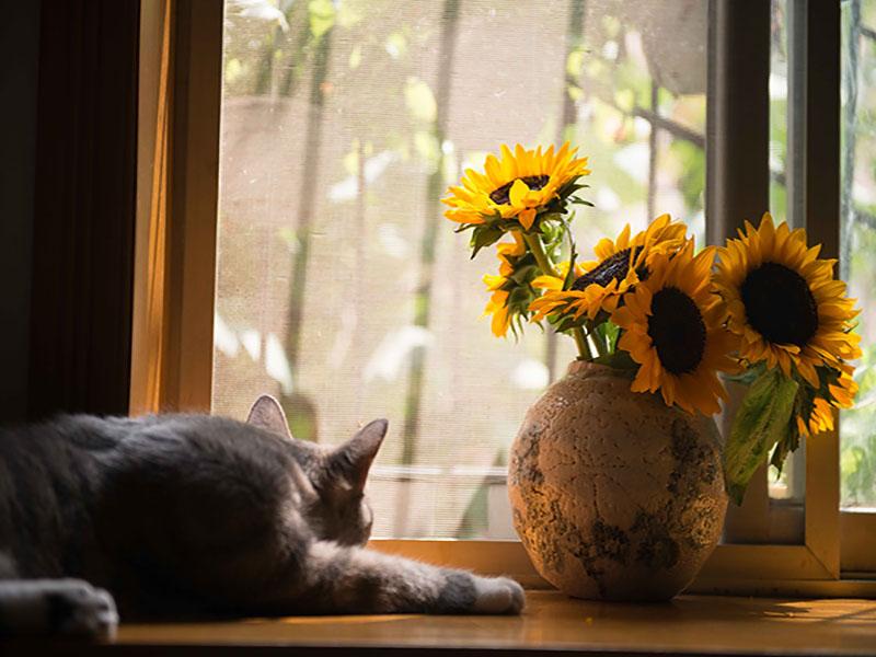 fenêtre chat