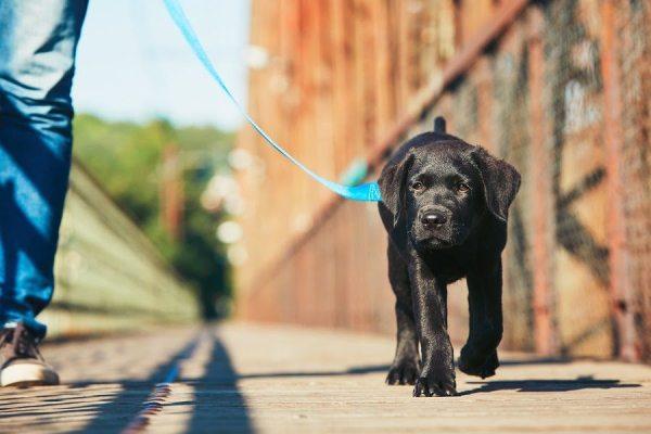 promenades chien atlanta