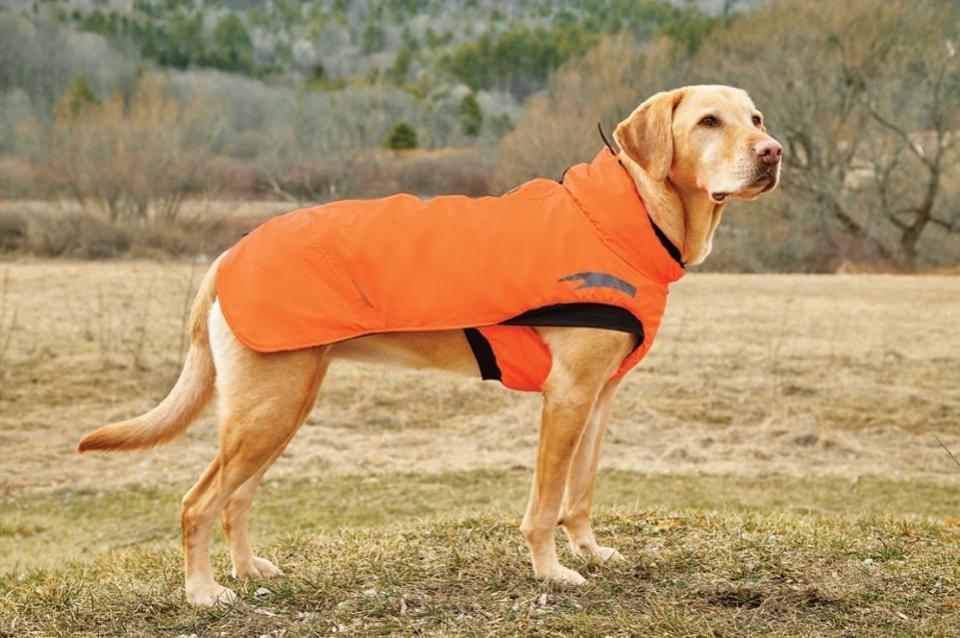 Manteau de pluie chien