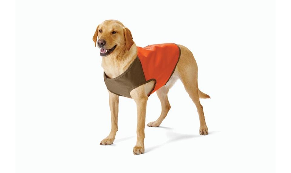 protecteur de coffre de chien