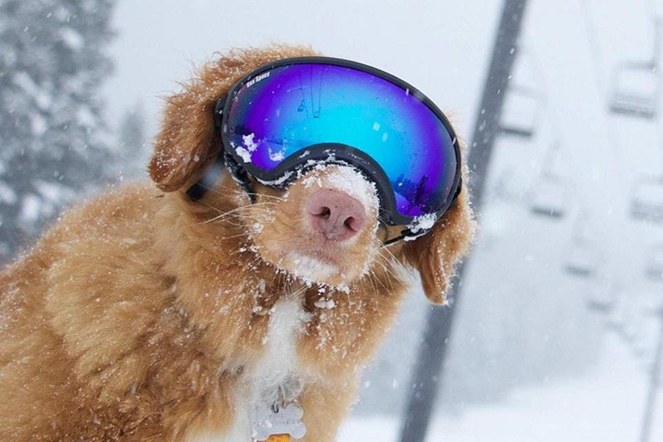 Meilleur équipement de chien pour l'automne et l'hiver