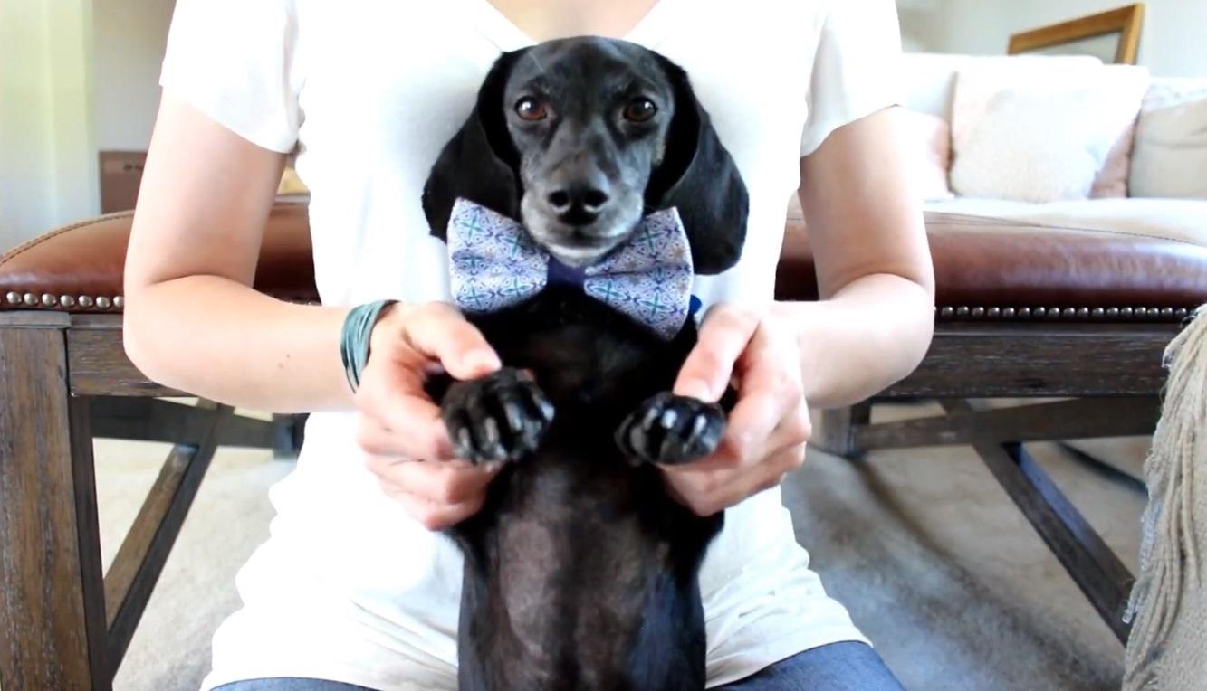Gardez vos pattes de chien cool toujours