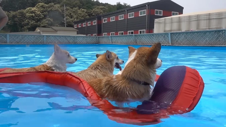Soyez autour de votre chien quand il nage