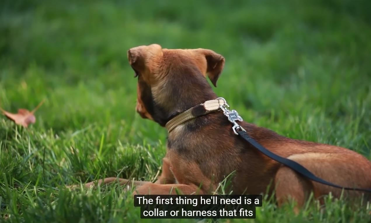 Gardez votre chien en laisse en cas de besoin