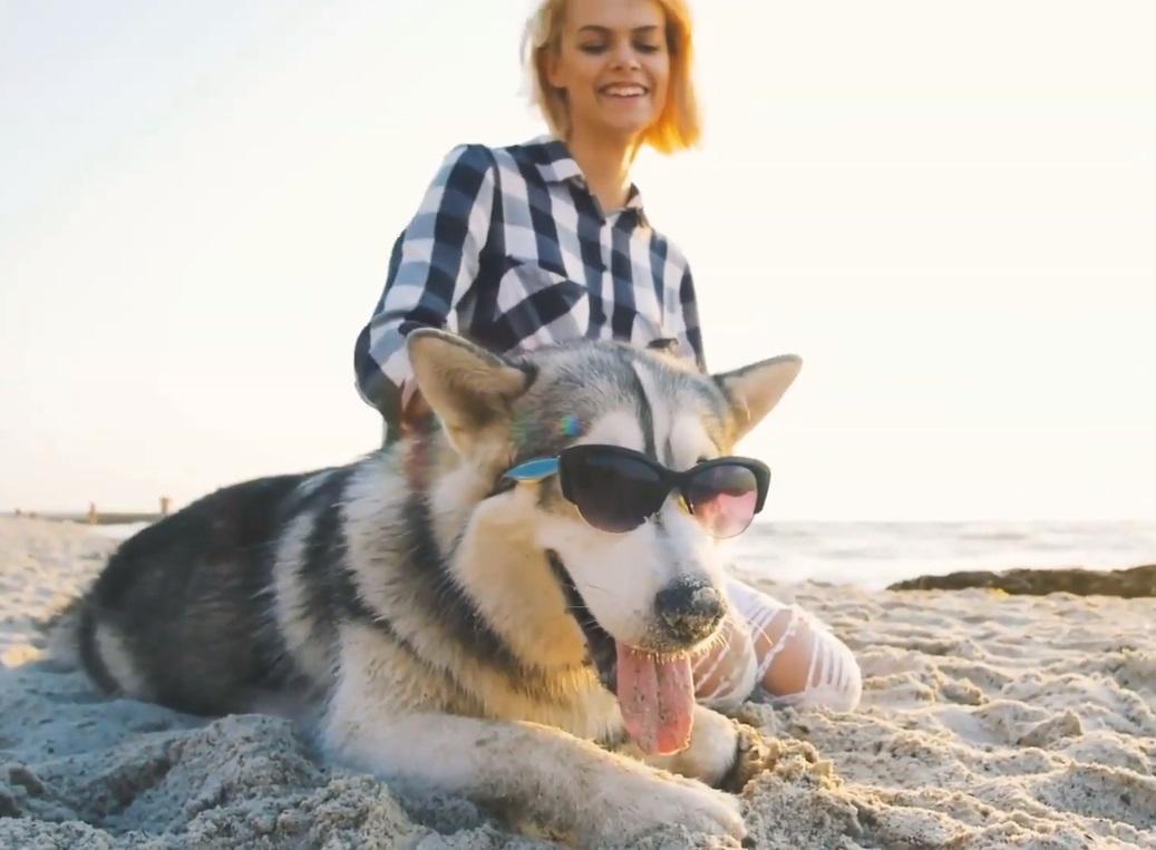 Votre chien peut aussi avoir des coups de soleil