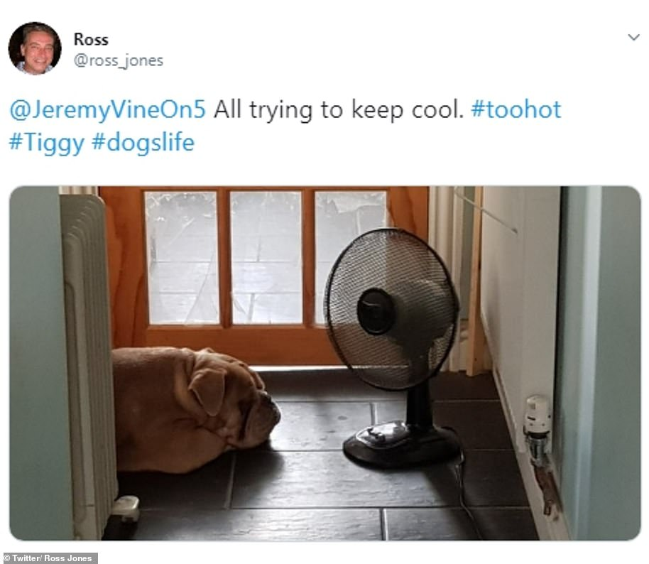 Those working from homeplonked their pets in front of desk fans to stop them overheating. Ross put his pooch Twiggy where he would stay the coolest