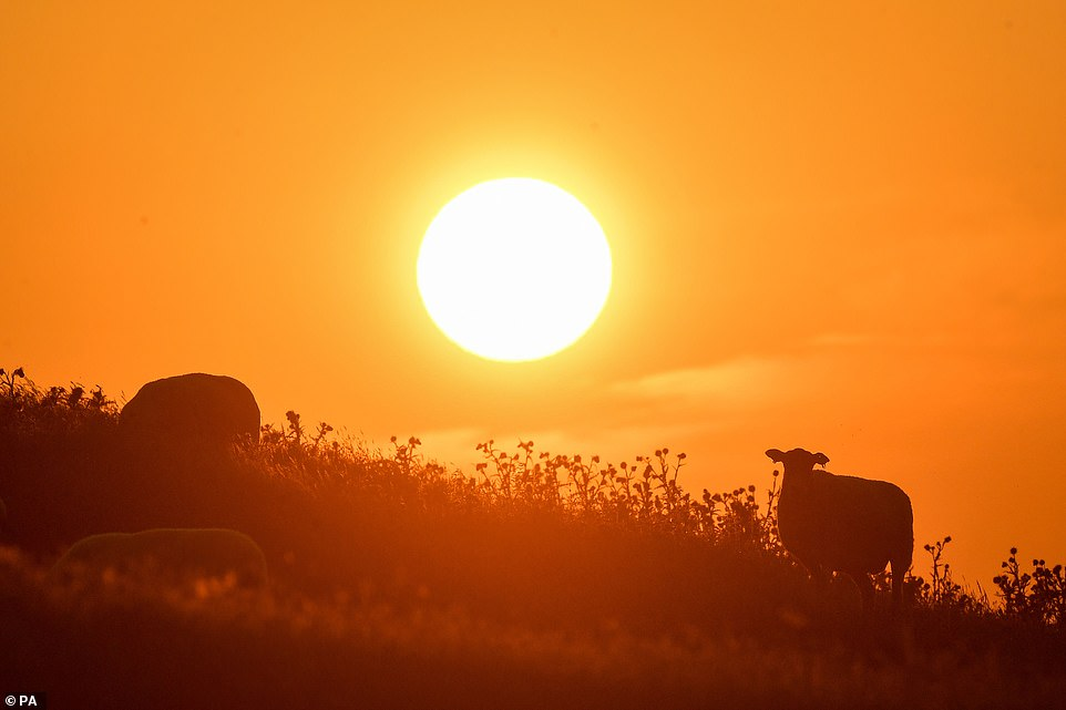 The sun rises today over Burton Dassett Hills in Southam, Warwickshire, ahead of what could be the hottest UK day on record