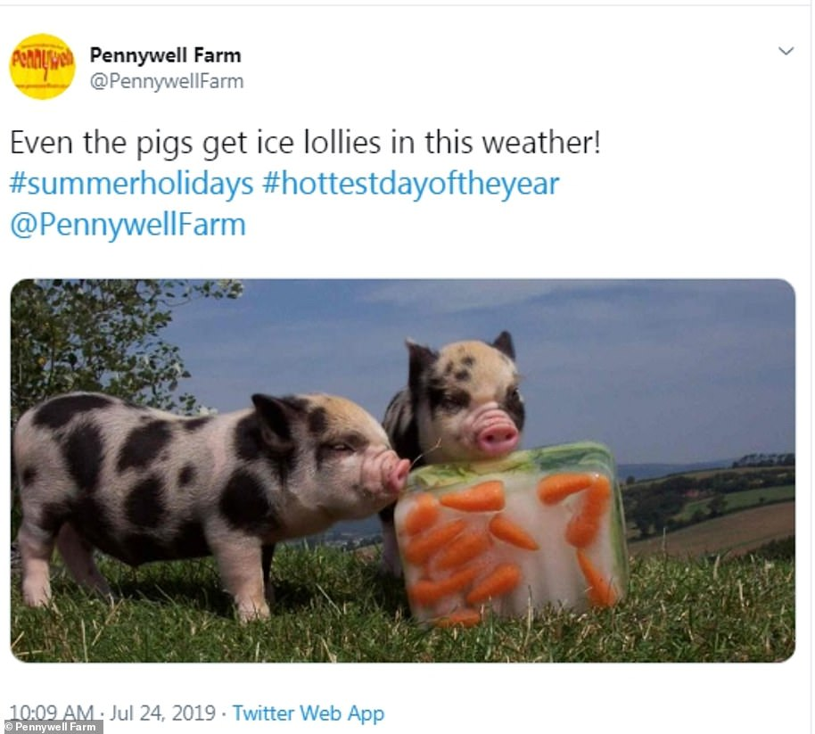 These piglets at Pennywell Farm in Devon were given their lunch inside an ice cube yesterday