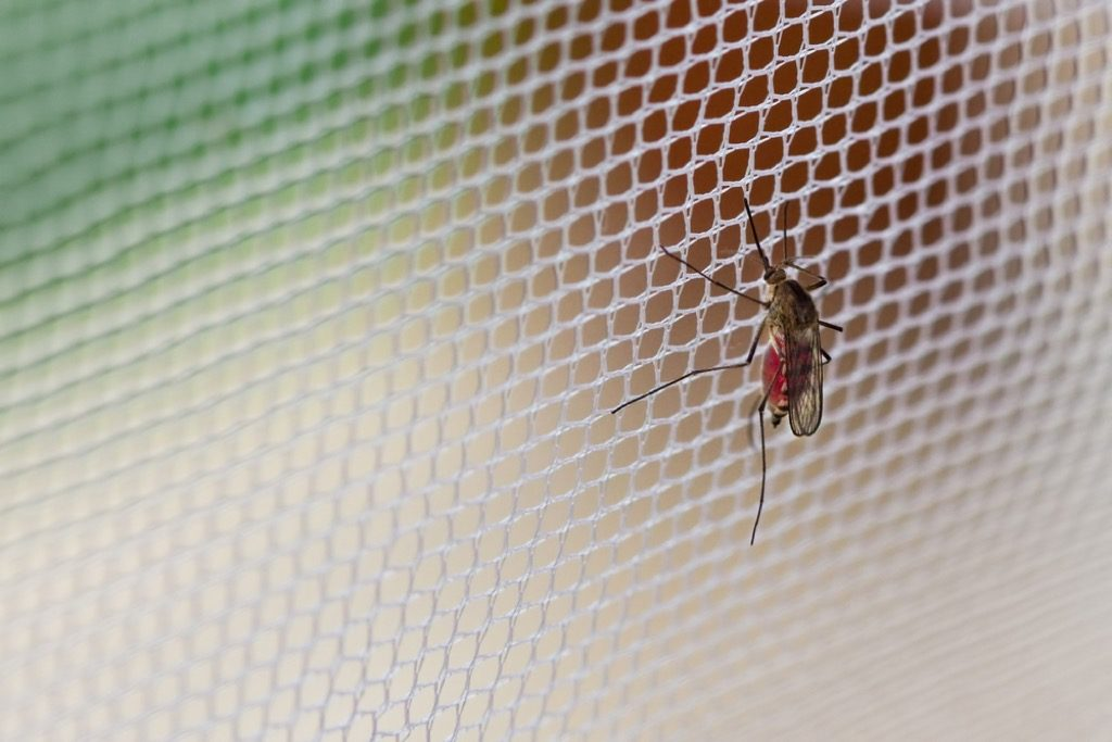 """Mosquito netting"""" width=""""1024"""" height=""""683"""" srcset=""""https://i1.wp.com/bestlifeonline.com/wp-content/uploads/2018/05/Mosquito-Net.jpg?w=1024&ssl=1 1024w, https://i1.wp.com/bestlifeonline.com/wp-content/uploads/2018/05/Mosquito-Net.jpg?resize=500%2C333&ssl=1 500w, https://i1.wp.com/bestlifeonline.com/wp-content/uploads/2018/05/Mosquito-Net.jpg?resize=768%2C512&ssl=1 768w"""" sizes=""""(max-width: 1000px) 100vw, 1000px"""" data-recalc-dims=""""1"""