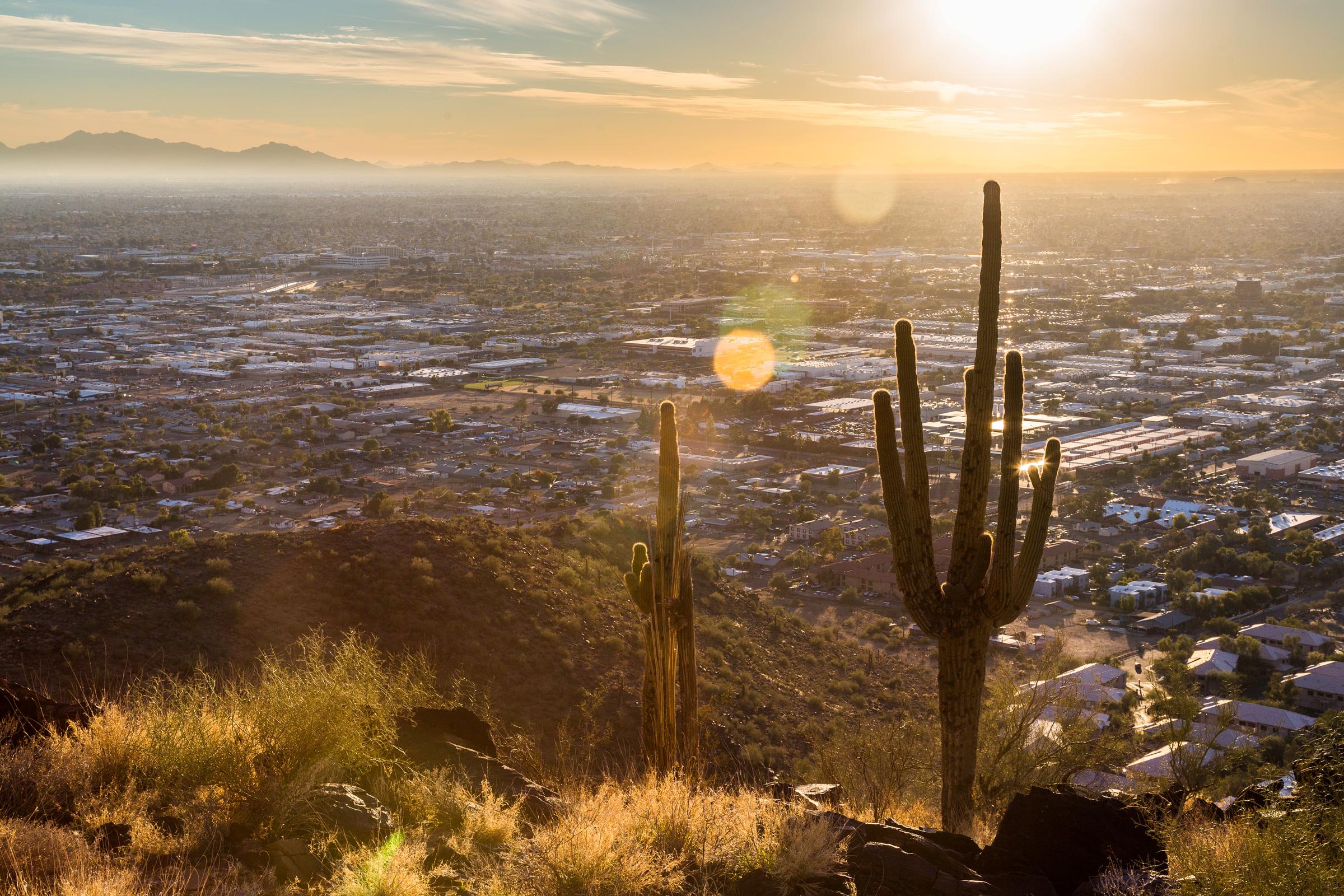 Cactus dans l'environnement désertique de la zone de randonnée Piestawa Peak à Phoenix Arizona