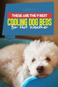 """Top 9 des meilleurs lits de refroidissement pour chiens par temps chaud """"width ="""" 200 """"height ="""" 300 """"srcset ="""" https://topdogtips.com/wp-content/uploads/2018/10/Top-9-Best-Cooling-Dog -Beds-for-Hot-Weather-200x300.jpg 200w, https://topdogtips.com/wp-content/uploads/2018/10/Top-9-Best-Cooling-Dog-Beds-for-Hot-Weather- 683x1024.jpg 683w, https://topdogtips.com/wp-content/uploads/2018/10/Top-9-Best-Cooling-Dog-Beds-for-Hot-Weather-107x160.jpg 107w, https: // topdogtips.com/wp-content/uploads/2018/10/Top-9-Best-Cooling-Dog-Beds-for-Hot-Weather-280x420.jpg 280w, https://topdogtips.com/wp-content/uploads /2018/10/Top-9-Best-Cooling-Dog-Beds-for-Hot-Weather-640x960.jpg 640w, https://topdogtips.com/wp-content/uploads/2018/10/Top-9- Best-Cooling-Dog-Beds-for-Hot-Weather-681x1021.jpg 681w, https://topdogtips.com/wp-content/uploads/2018/10/Top-9-Best-Cooling-Dog-Beds-for -Hot-Weather.jpg 735w """"tailles ="""" (largeur max: 200px) 100vw, 200px"""
