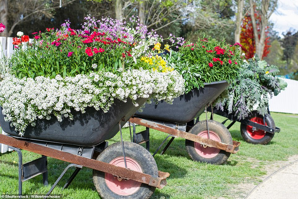 In order to create bigger specimens with a larger root system, it¿s best to set each plug into a 3½in-to-4in pot filled with multi-purpose compost. Once they¿ve established, hardy flowers and edibles can go outside