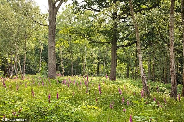 Les scientifiques estiment que le temps plus chaud et plus humide entraînera une augmentation globale de la végétation dans les endroits tempérés comme la Grande-Bretagne